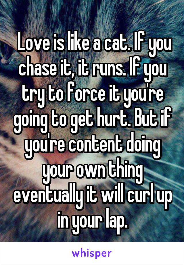 Love is like a cat. If you chase it, it runs. If you try to force it you're going to get hurt. But if you're content doing your own thing eventually it will curl up in your lap.