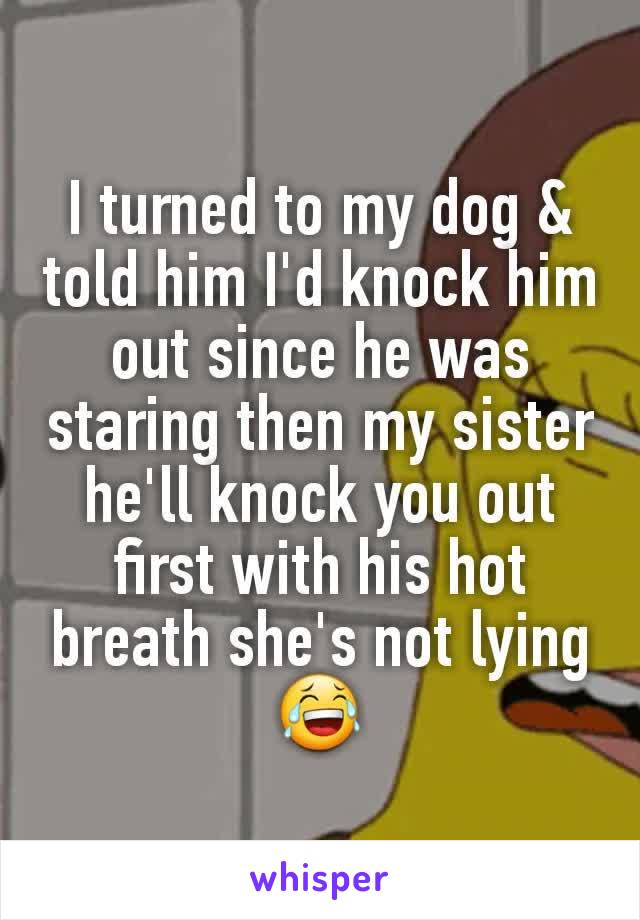 I turned to my dog & told him I'd knock him out since he was staring then my sister he'll knock you out first with his hot breath she's not lying 😂