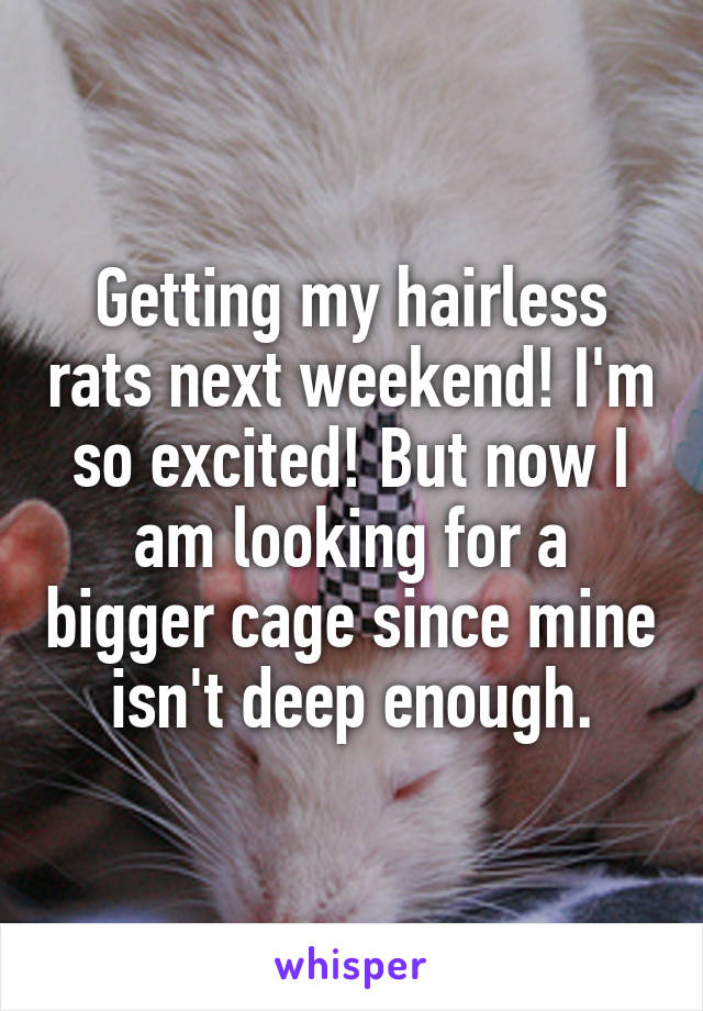 Getting my hairless rats next weekend! I'm so excited! But now I am looking for a bigger cage since mine isn't deep enough.
