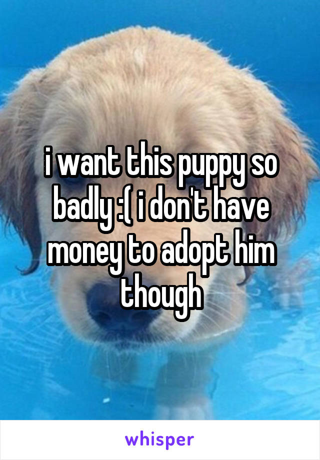 i want this puppy so badly :( i don't have money to adopt him though