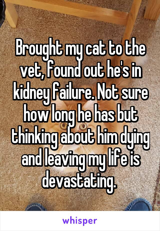 Brought my cat to the vet, found out he's in kidney failure. Not sure how long he has but thinking about him dying and leaving my life is devastating.