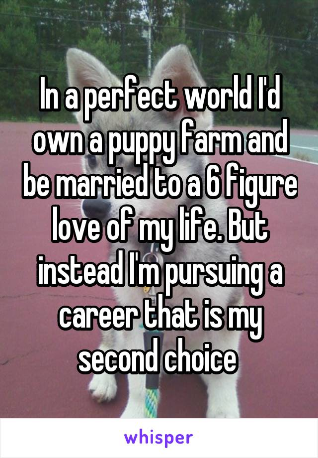 In a perfect world I'd own a puppy farm and be married to a 6 figure love of my life. But instead I'm pursuing a career that is my second choice