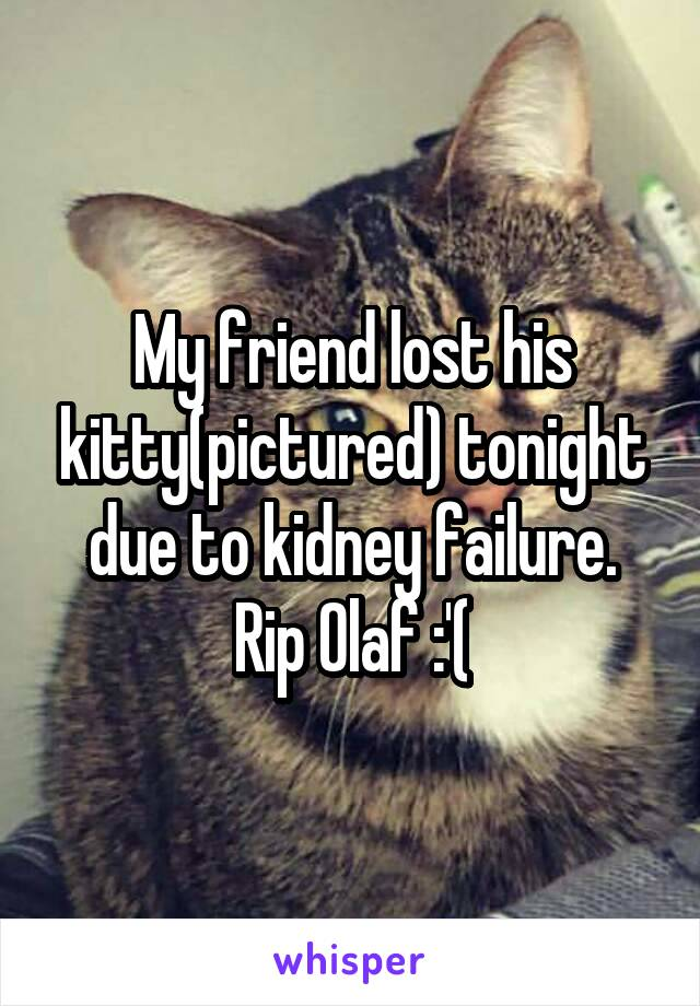My friend lost his kitty(pictured) tonight due to kidney failure. Rip Olaf :'(