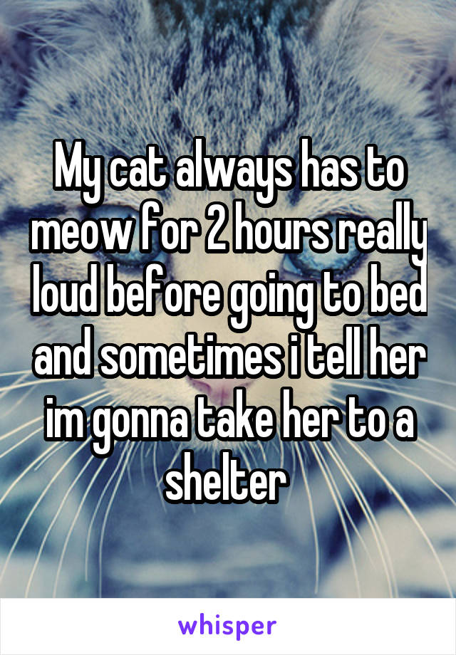 My cat always has to meow for 2 hours really loud before going to bed and sometimes i tell her im gonna take her to a shelter
