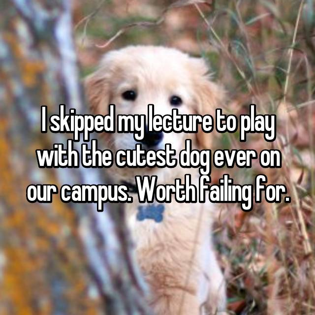 I skipped my lecture to play with the cutest dog ever on our campus. Worth failing for.