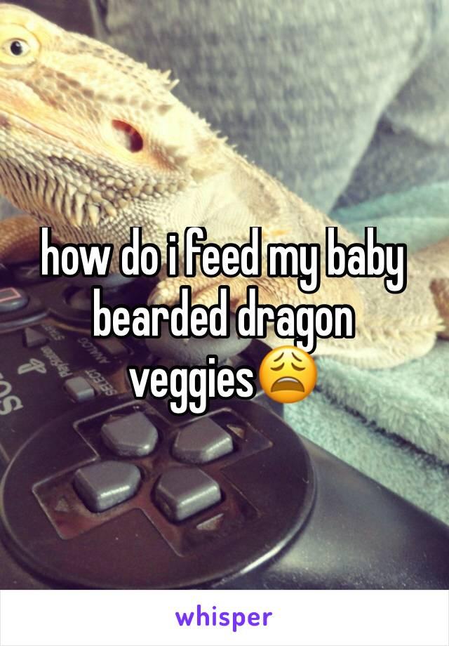 how do i feed my baby bearded dragon veggies😩