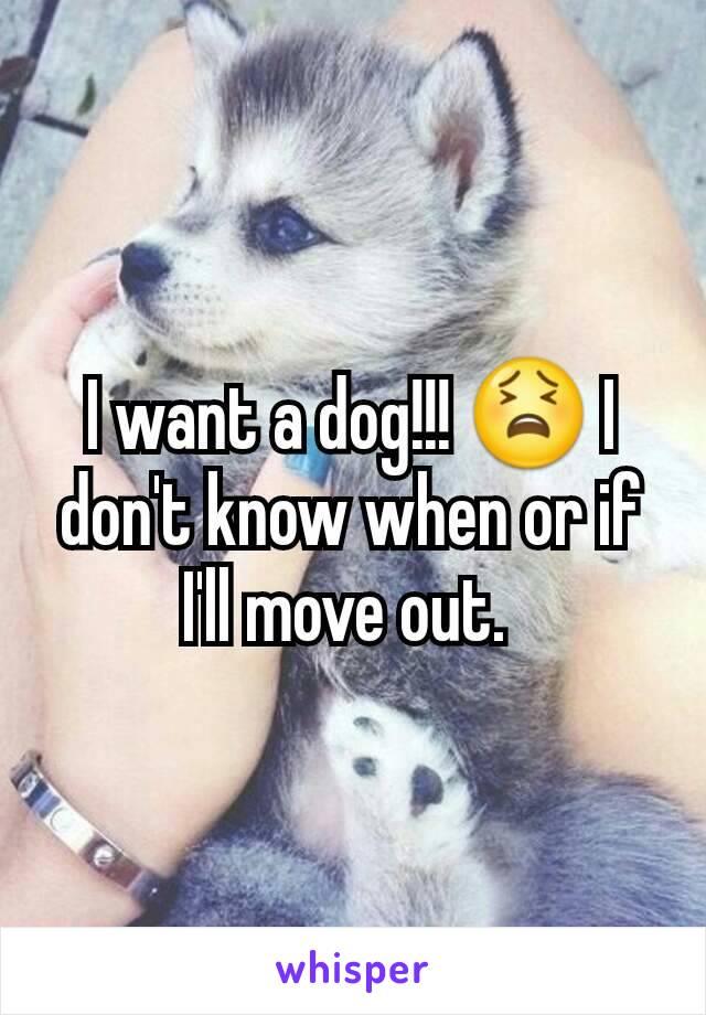 I want a dog!!! 😫 I don't know when or if I'll move out.