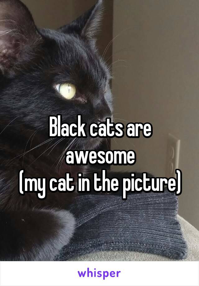 Black cats are awesome (my cat in the picture)