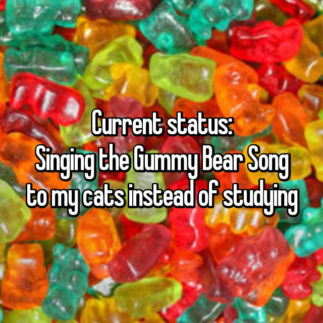 Current status: Singing the Gummy Bear Song to my cats instead of studying😹🍬🐻