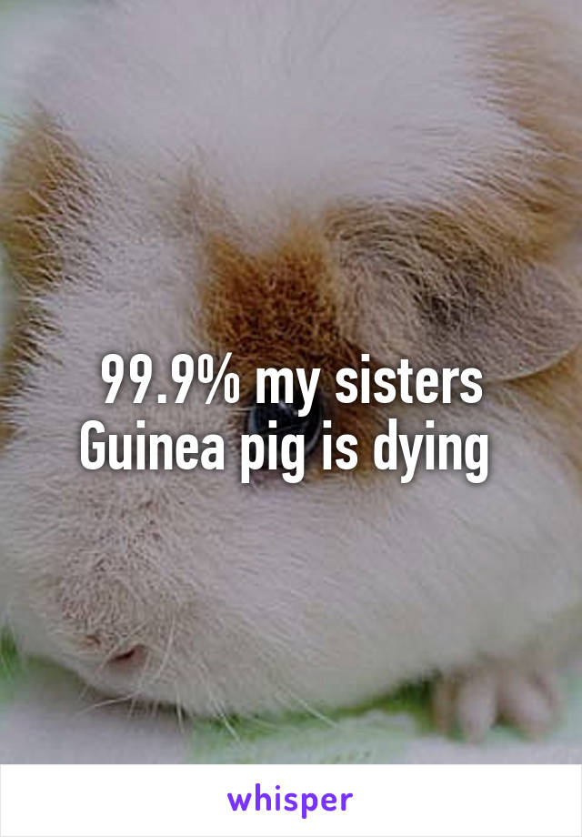 99.9% my sisters Guinea pig is dying