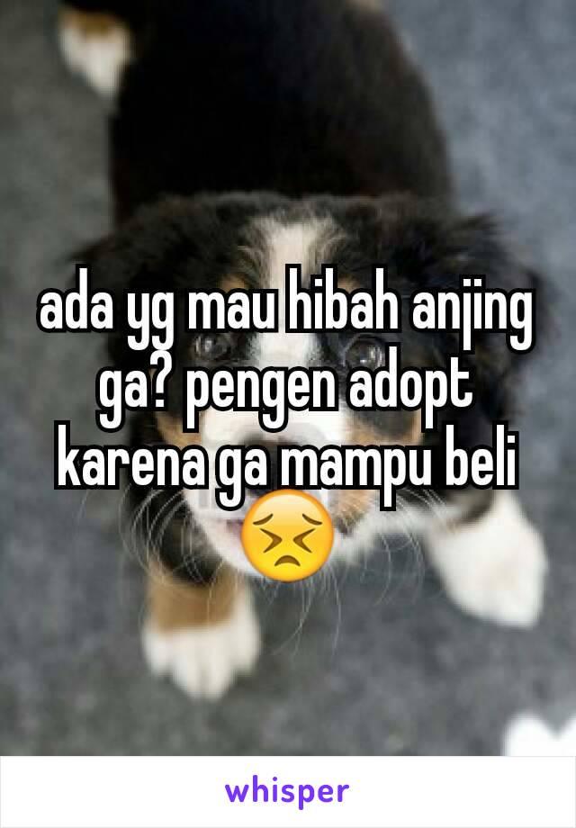 ada yg mau hibah anjing ga? pengen adopt karena ga mampu beli 😣
