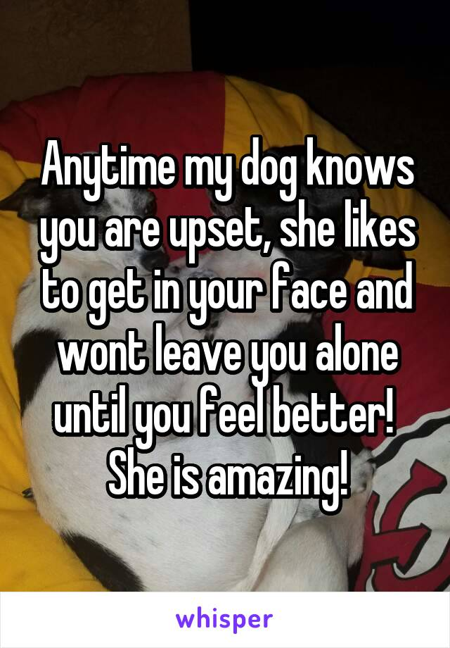 Anytime my dog knows you are upset, she likes to get in your face and wont leave you alone until you feel better!  She is amazing!
