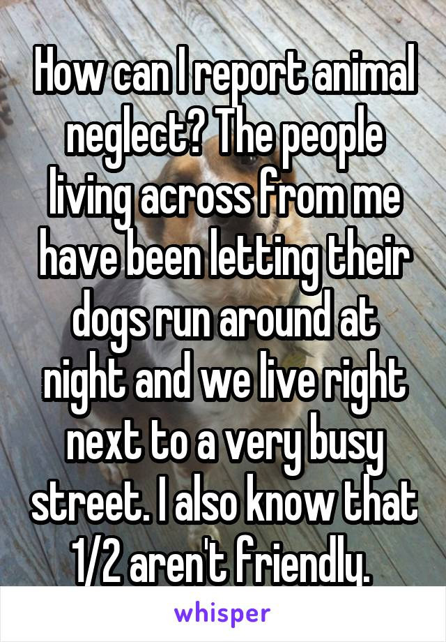 How can I report animal neglect? The people living across from me have been letting their dogs run around at night and we live right next to a very busy street. I also know that 1/2 aren't friendly.