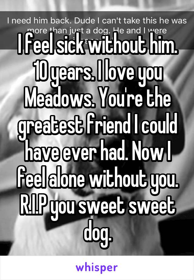 I feel sick without him. 10 years. I love you Meadows. You're the greatest friend I could have ever had. Now I feel alone without you. R.I.P you sweet sweet dog.