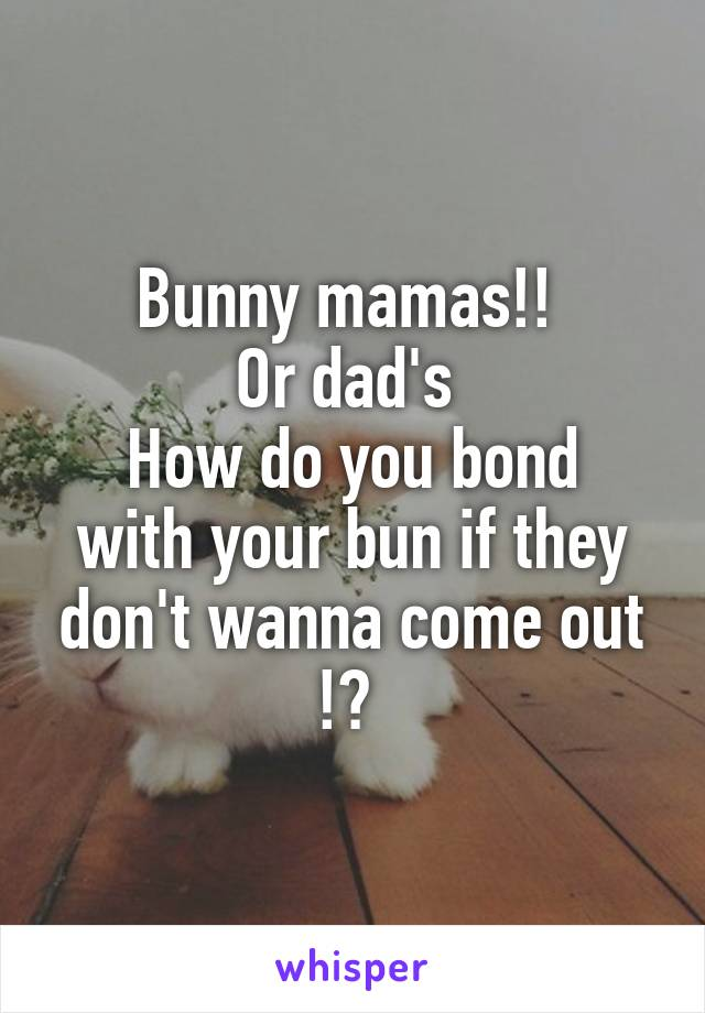 Bunny mamas!!  Or dad's  How do you bond with your bun if they don't wanna come out !?