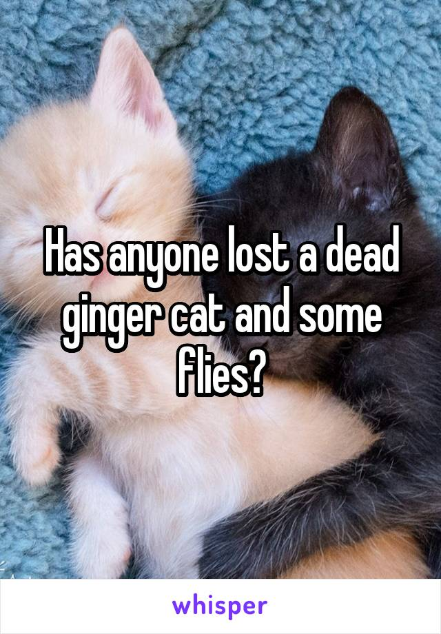 Has anyone lost a dead ginger cat and some flies?