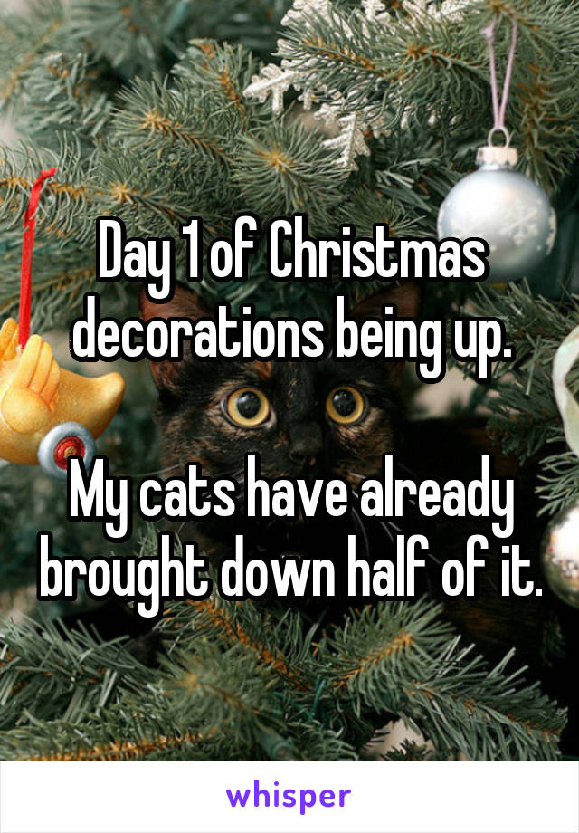 Day 1 of Christmas decorations being up.  My cats have already brought down half of it.