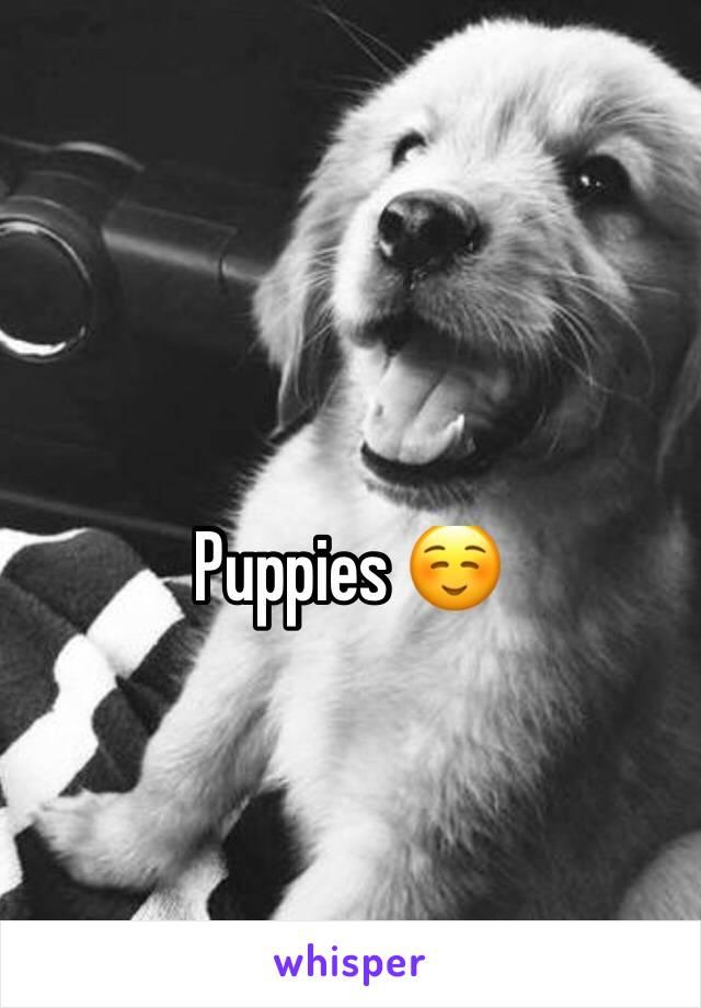 Puppies ☺️
