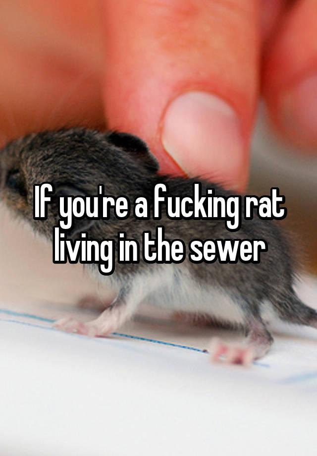de rat cuisine v5
