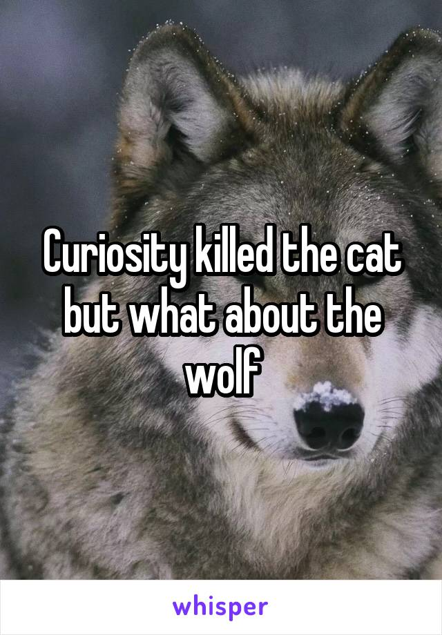 Curiosity killed the cat but what about the wolf