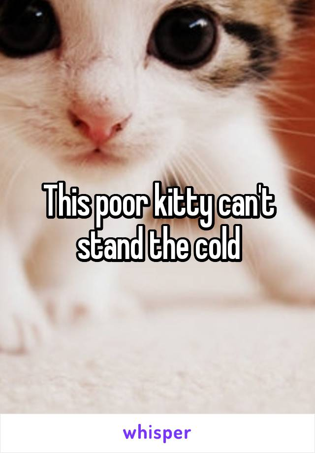 This poor kitty can't stand the cold