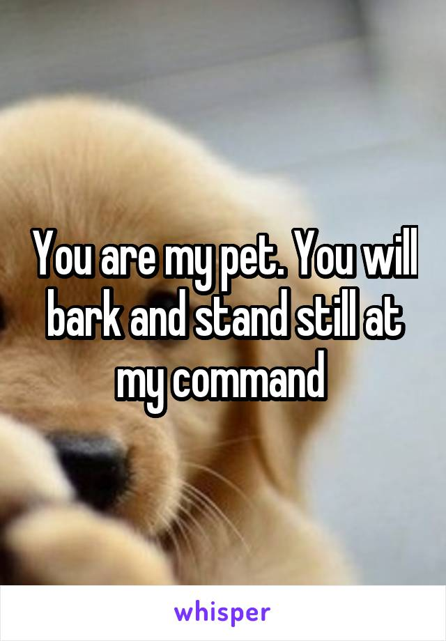 You are my pet. You will bark and stand still at my command