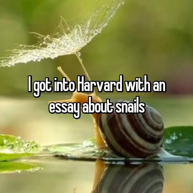 I got into Harvard with an essay about snails