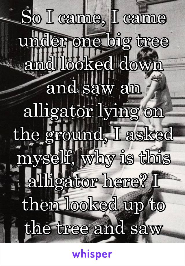 """So I came, I came under one big tree and looked down and saw an alligator lying on the ground, I asked myself, why is this alligator here? I then looked up to the tree and saw some bees,""""smile"""""""