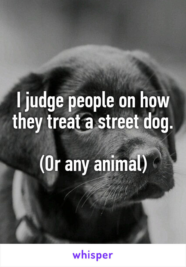 I judge people on how they treat a street dog.  (Or any animal)