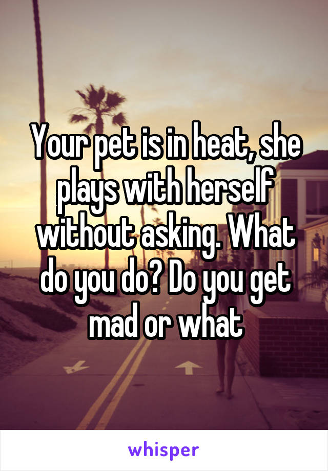Your pet is in heat, she plays with herself without asking. What do you do? Do you get mad or what