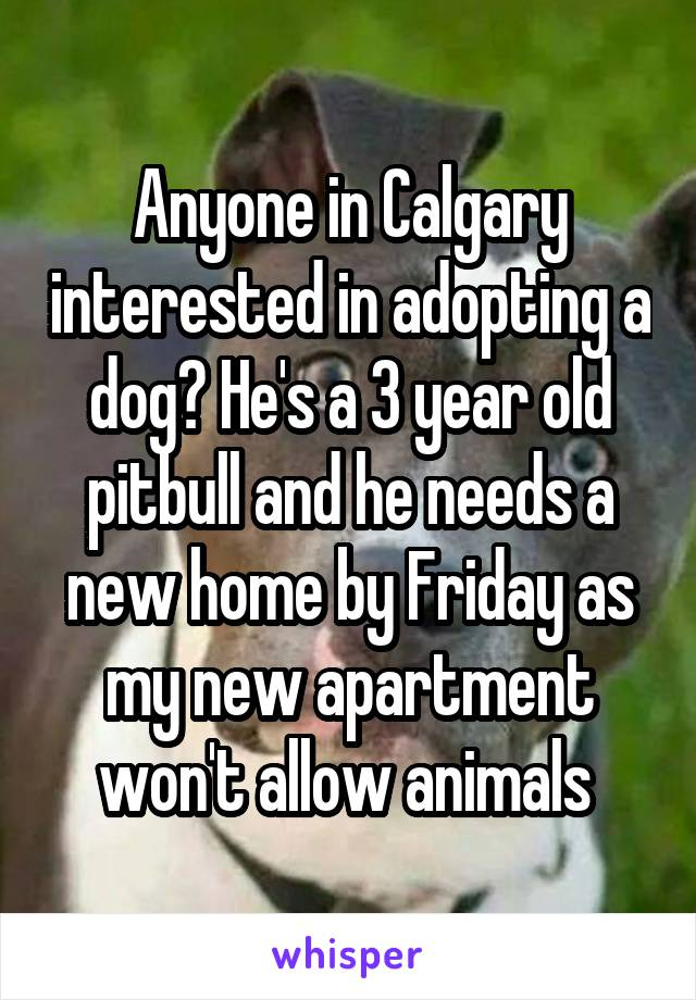 Anyone in Calgary interested in adopting a dog? He's a 3 year old pitbull and he needs a new home by Friday as my new apartment won't allow animals