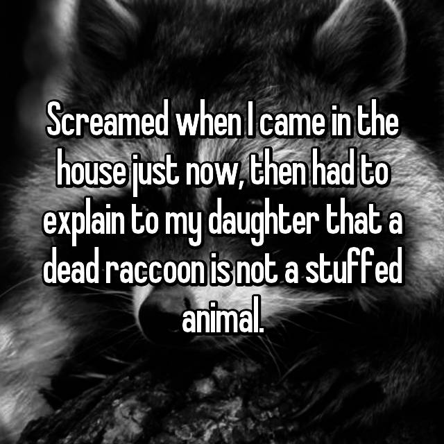 Screamed when I came in the house just now, then had to explain to my daughter that a dead raccoon is not a stuffed animal.