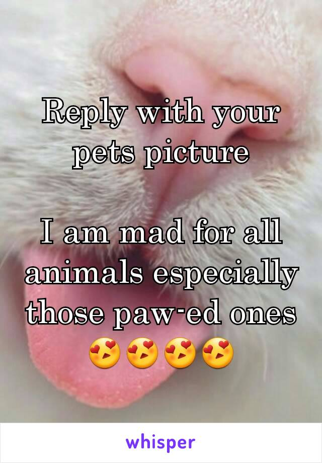 Reply with your pets picture  I am mad for all animals especially those paw-ed ones😍😍😍😍