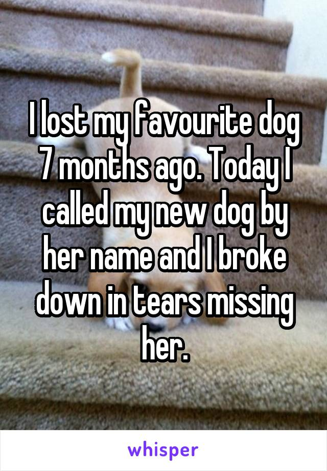I lost my favourite dog 7 months ago. Today I called my new dog by her name and I broke down in tears missing her.