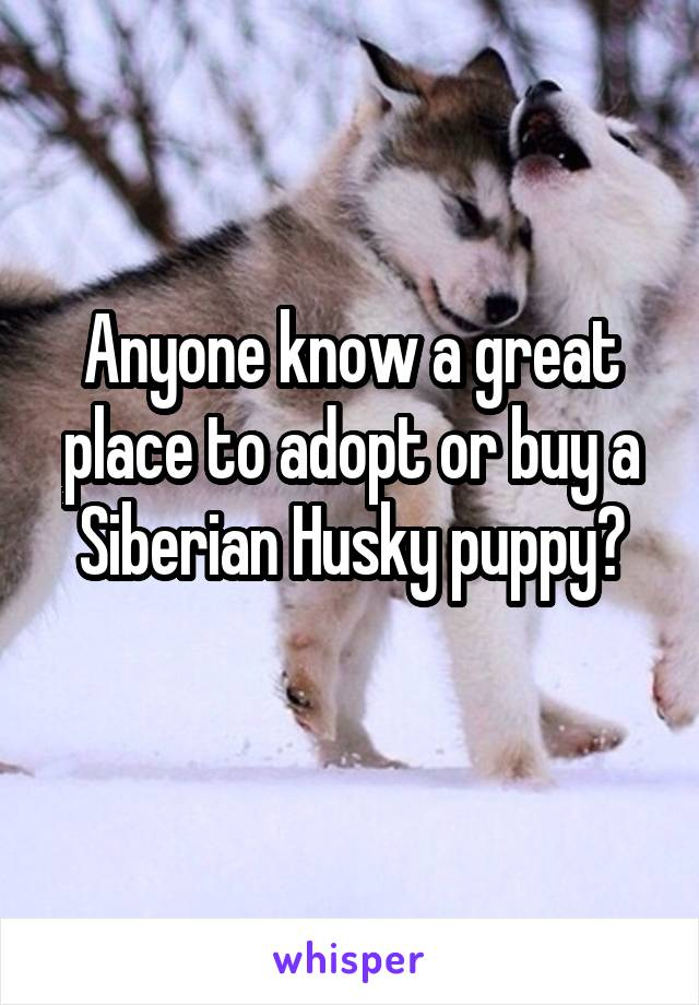 Anyone know a great place to adopt or buy a Siberian Husky puppy?