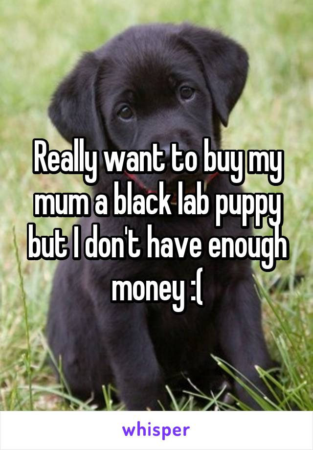 Really want to buy my mum a black lab puppy but I don't have enough money :(