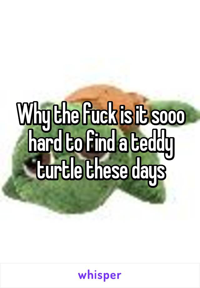 Why the fuck is it sooo hard to find a teddy turtle these days