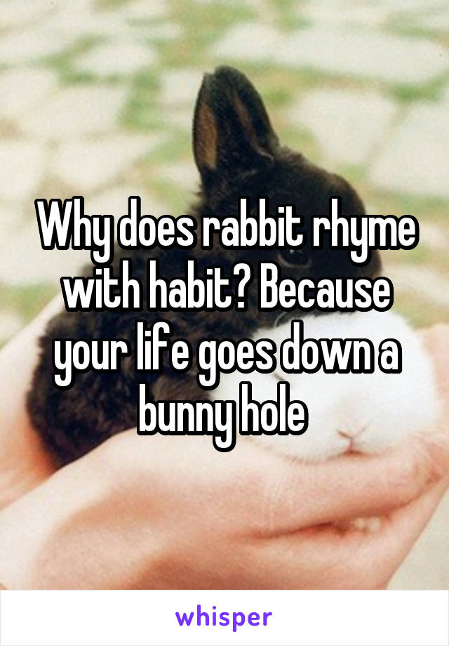 Why does rabbit rhyme with habit? Because your life goes down a bunny hole