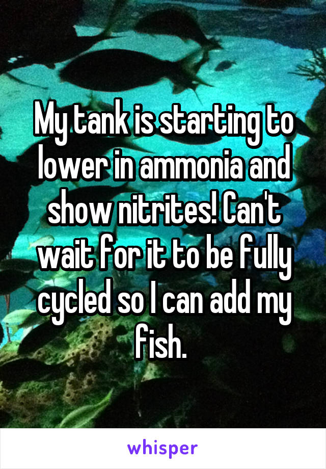 My tank is starting to lower in ammonia and show nitrites! Can't wait for it to be fully cycled so I can add my fish.