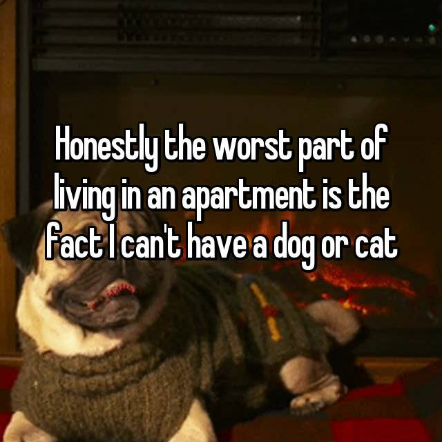 Honestly the worst part of living in an apartment is the fact I can't have a dog or cat