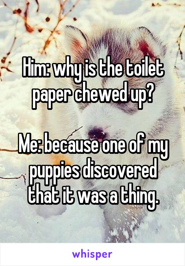 Him: why is the toilet paper chewed up?  Me: because one of my puppies discovered that it was a thing.