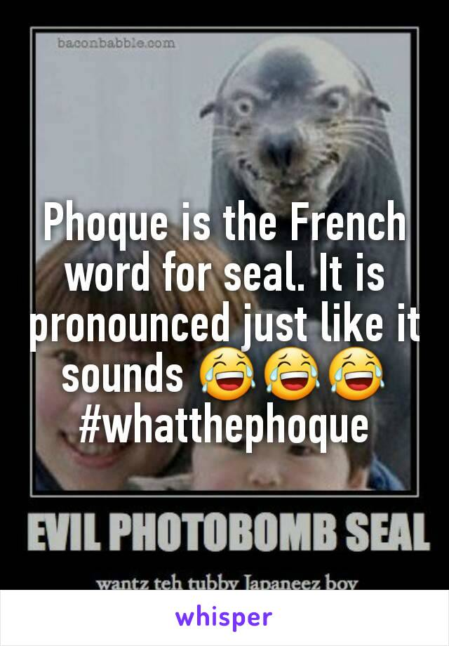 Phoque is the French word for seal. It is pronounced just like it sounds 😂😂😂 #whatthephoque