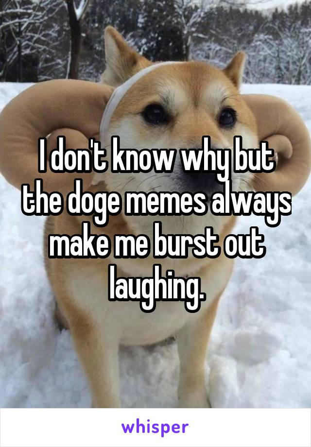 I don't know why but the doge memes always make me burst out laughing.