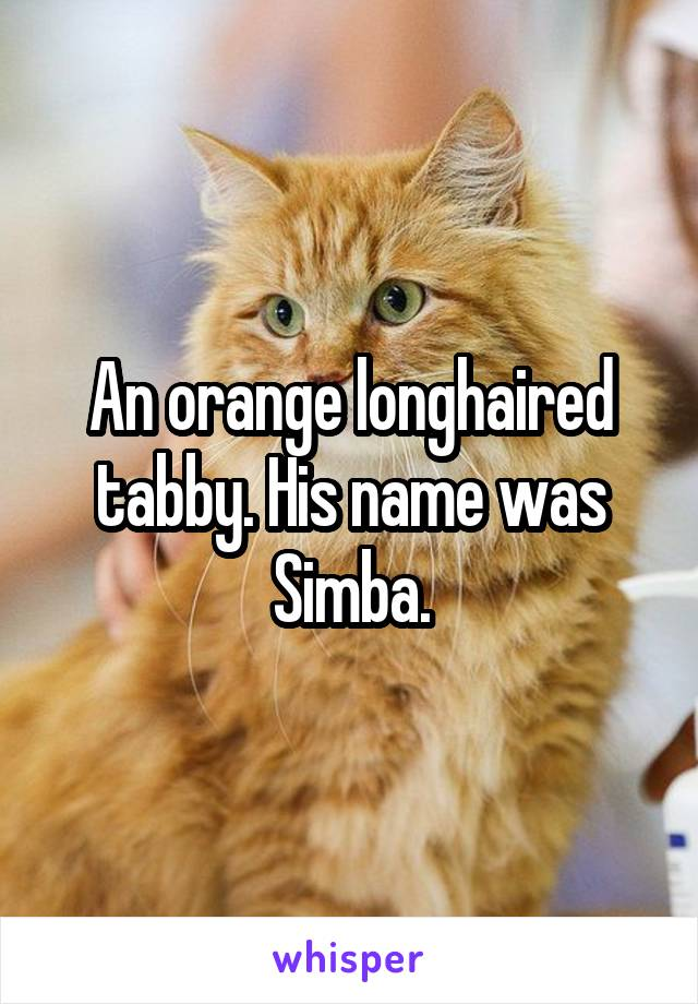 An orange longhaired tabby. His name was Simba.