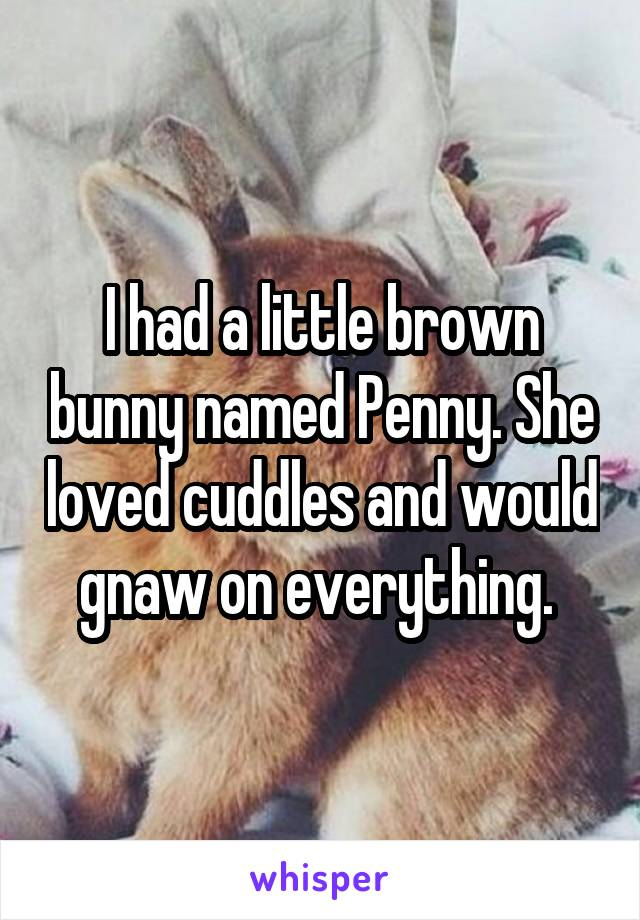 I had a little brown bunny named Penny. She loved cuddles and would gnaw on everything.