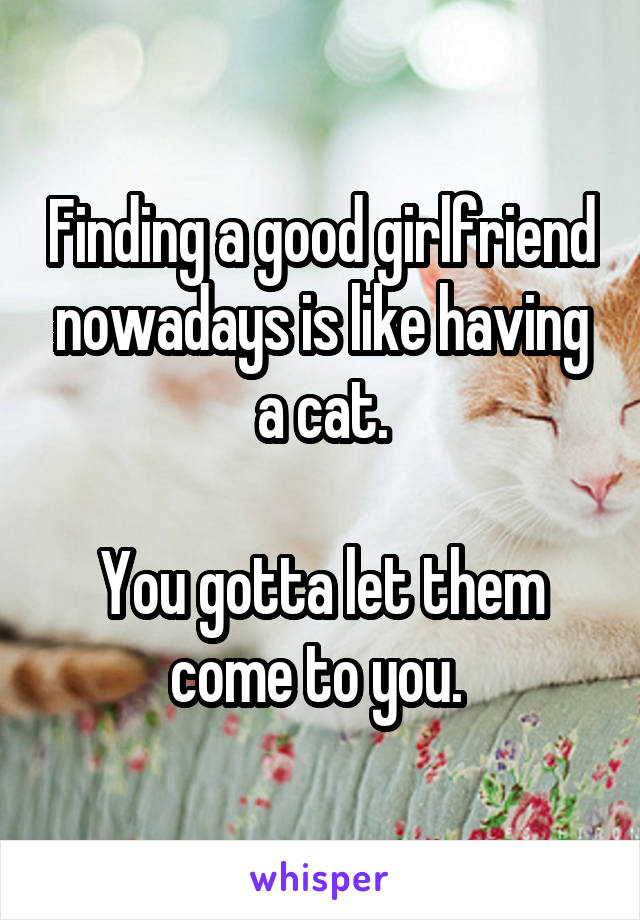 Finding a good girlfriend nowadays is like having a cat.  You gotta let them come to you.