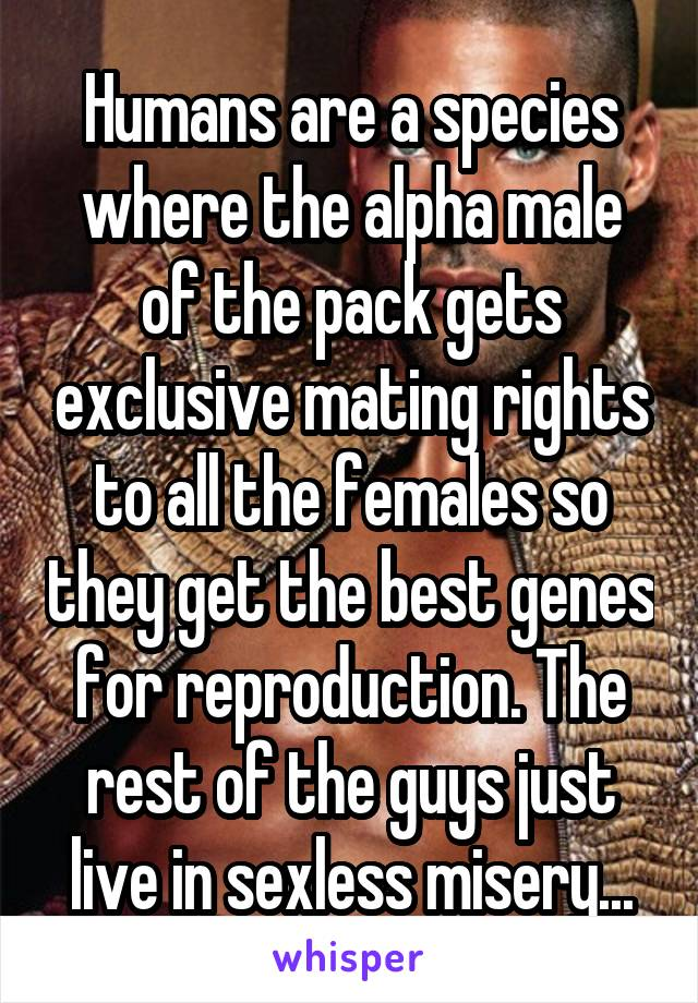 An in humans is what male alpha Is The