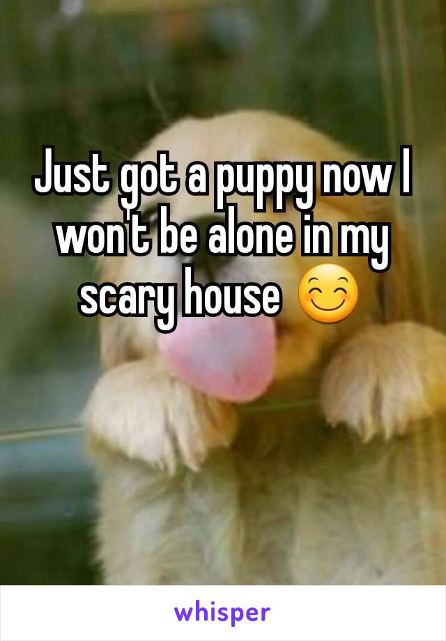 Just got a puppy now I won't be alone in my scary house 😊