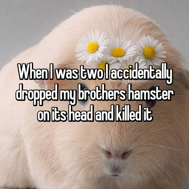 When I was two I accidentally dropped my brothers hamster on its head and killed it 😰