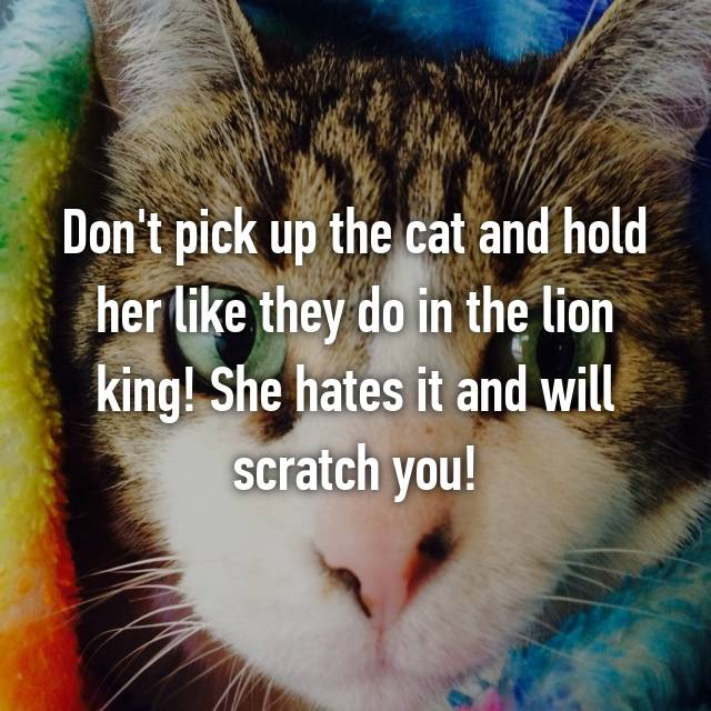 Don't pick up the cat and hold her like they do in the lion king! She hates it and will scratch you!